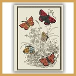 Bright Butterfly Botanical Sketch 2